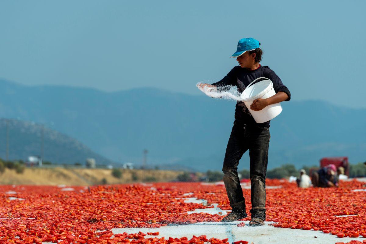 sušeni paradajz turska radnik