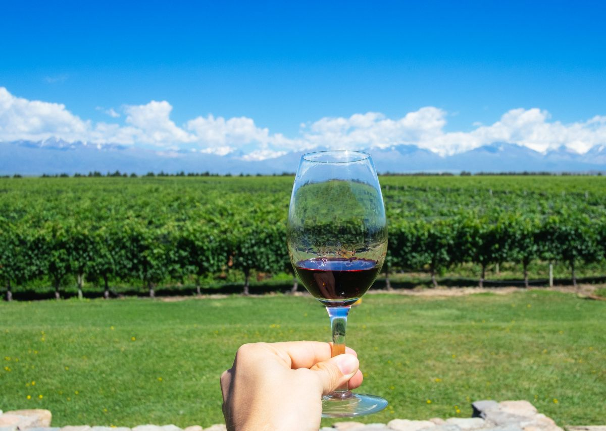 čaša vina crvena vina malbec